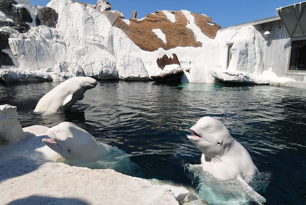 SeaWorld Wild Arctic